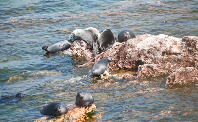 The Rookery of Baikal Seal