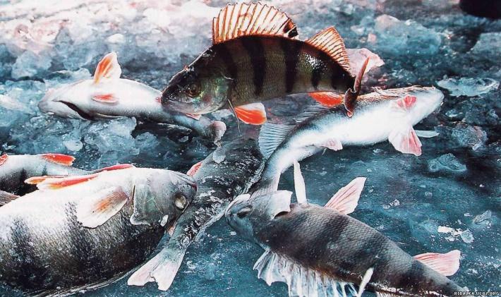 Обувь для зимней рыбалки охоты и туризма